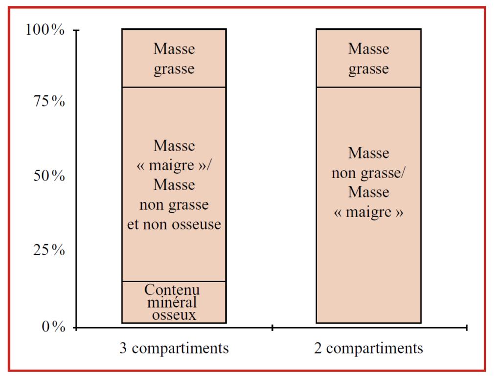 composition corporelle, obésité, nutrition, emnoline
